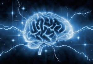 Hersenontwikkeling in grote lijnen